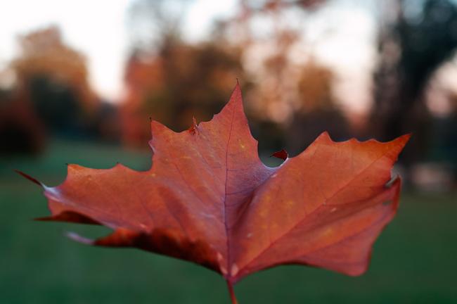 Enhancing Autumn