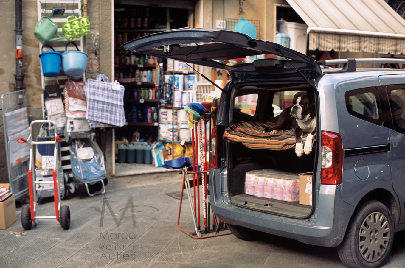 Pisa, Italy - March 29, 2013: a small van is parked in front of a traditional corner shop for home accessories; a good looking San Bernardo dog guards the property. This happens in the historic centre of Pisa, near the traditional market of Piazza delle Vettovaglie. Shallow depth of focus, on the dog. Scan from Provia 100F, slightly toned.