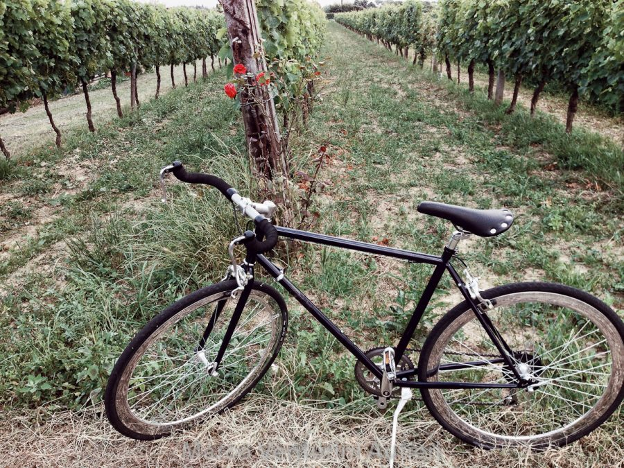 This is my bike, just parked near vines decorated by a small rosebush