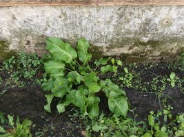 Il nuovo orto botanico di Ghezzano