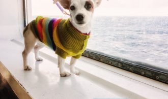 Travelling on a ship in Italy with your dog