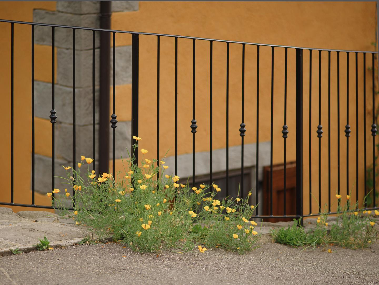 I fiori di Dogana Nuova (MO)